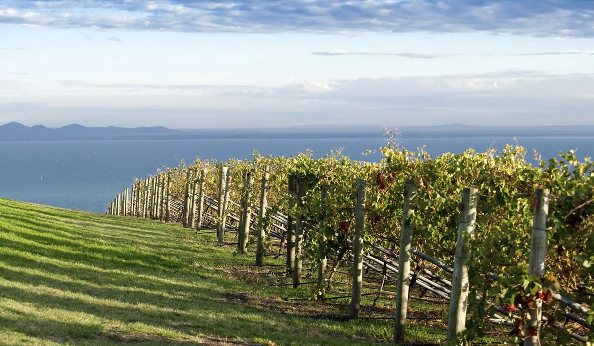 Where wine country meets the bay.